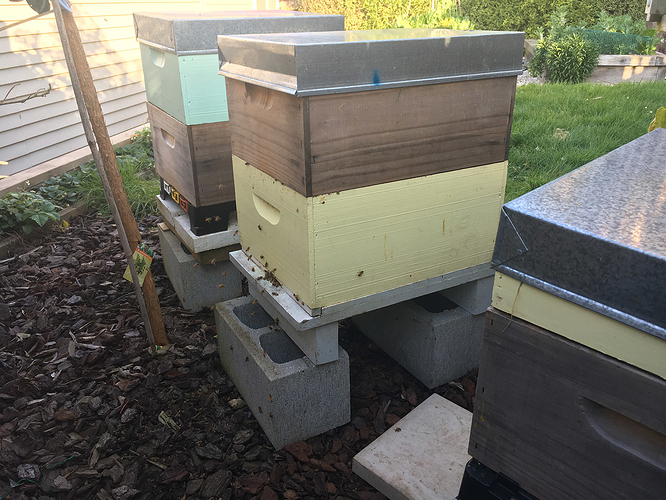 20170924 - hives