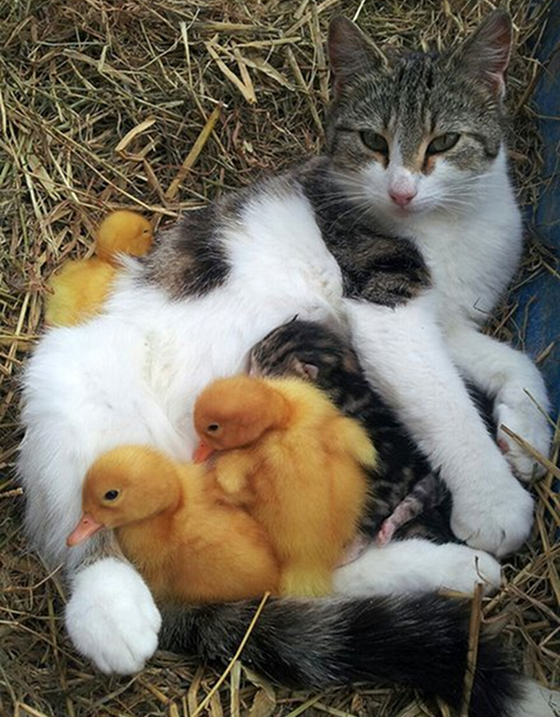 catsducklings